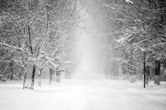 Snowing landscape in the park. Snowing, beautiful landscape in the park Royalty Free Stock Images