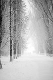Snowing landscape in the park Stock Photos