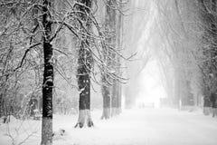 Snowing landscape in the park. Snowing, beautiful landscape in the park Royalty Free Stock Photos