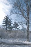Snowing landscape in the park royalty free stock photography