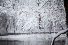 Snowing landscape in the park. With beautiful details Royalty Free Stock Image