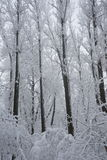 Snowing landscape in the park Royalty Free Stock Images