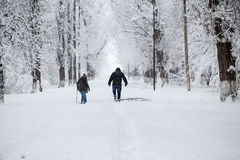 Snowing landscape in the park. With beautiful details Stock Photo