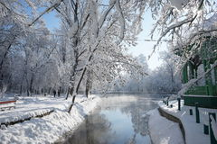 Snowing landscape in the park. With beautiful details Royalty Free Stock Photos