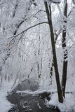 Snowing landscape in the park. With beautiful details Stock Photos