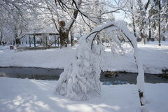 Snowing landscape in the park. With beautiful details Royalty Free Stock Photography