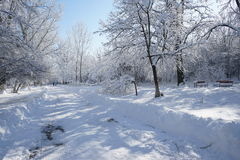 Snowing landscape in the park. With beautiful details Royalty Free Stock Photo