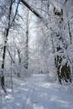 Snowing landscape in the park. In a beautiful sunny day Stock Photography