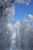 Snowing landscape in the park. In a beautiful sunny day Royalty Free Stock Images