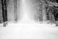 Snowing landscape in the park Stock Image