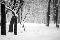 Snowing landscape in the park. With beautiful view Stock Photo