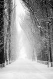 Snowing landscape in the park. With details Royalty Free Stock Images