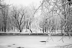 Snowing landscape in the park. Details on the branches. Stock Image