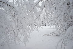 Snowing landscape in the park. Details on the branches. Snowing landscape in the park with snow details on the branches stock photo