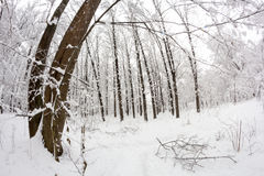 Snowing landscape in the park. Fisheye lens effects Stock Image