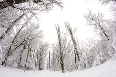 Snowing landscape in the park. Fisheye lens effects Royalty Free Stock Photo