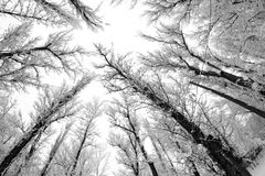 Snowing landscape in the park. Fisheye lens effects Royalty Free Stock Images