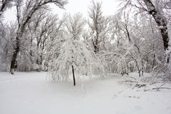 Snowing landscape in the park. Fisheye lens effects Stock Photos