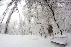 Snowing landscape in the park. Fisheye lens effects Royalty Free Stock Photography