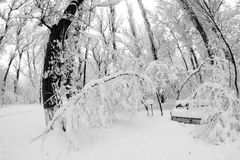 Snowing landscape in the park. Fisheye lens effects Royalty Free Stock Photos