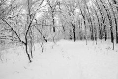 Snowing landscape in the park. Fisheye lens effects Stock Photo