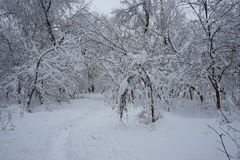 Snowing landscape in the park. Ith beautiful details Stock Photography