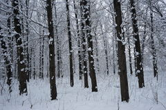 Snowing landscape in the park. Ith beautiful details Stock Photos