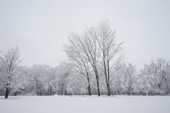 Snowing landscape in the park. Ith beautiful details Royalty Free Stock Photos