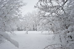 Snowing landscape in the park. Ith beautiful details Royalty Free Stock Images