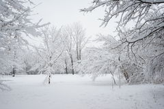 Snowing landscape in the park. Ith beautiful details Stock Photo