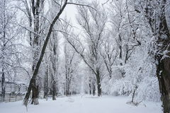 Snowing landscape in the park. Ith beautiful details Stock Image