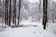 Snowing landscape in the park with people passing by Royalty Free Stock Photos