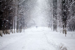 Snowing landscape in the park with people passing by Stock Image