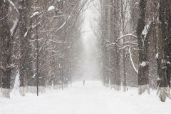 Snowing landscape in the park with people passing by Royalty Free Stock Image