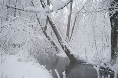 Snowing landscape in the park. With snow details Stock Photo