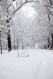Snowing landscape in the park. With snow details Stock Photography