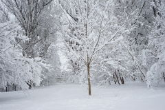 Snowing landscape in the park. With snow details Stock Image