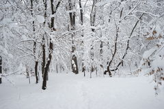 Snowing landscape in the park. With snow details Royalty Free Stock Image