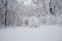 Snowing landscape in the park. With snow details Royalty Free Stock Photography