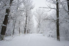 Snowing landscape in the park. With snow details Royalty Free Stock Images