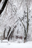 Snowing landscape in the park. With snow details Stock Photos