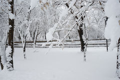 Snowing landscape in the park. With snow details Royalty Free Stock Photo