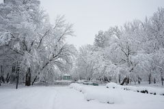 Snowing landscape in the park. With snow details Stock Images