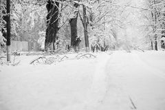 Snowing landscape in the park. With snow details Royalty Free Stock Photos