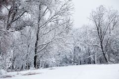 Snowing landscape in the park. In a beautiful sunny day Royalty Free Stock Photo