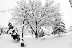 Snowing landscape in the park. In a beautiful sunny day Royalty Free Stock Image