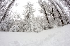 Snowing landscape in the park. In a beautiful sunny day Royalty Free Stock Photography