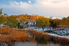 The snowing late autumn in Beijing Olympic Forest Park Stock Image