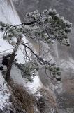 Snowing Mount Huangshan in China Stock Image