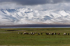 Snowing mountain in kirghizy. On the Song Kul lake in Kirghizy, the winter catch us up in august Royalty Free Stock Photo